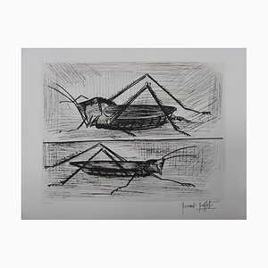Insects: Locust and Grasshopper Engraving by Bernard Buffet