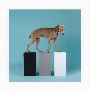 Dog with Three Cubes by William Wegman, 2016