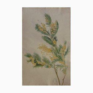 Maurice SAVIN - branche de Mimosa, 1912, Aquarelle signée et datée