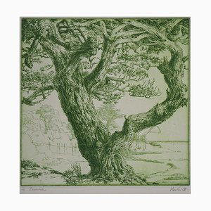 Green Tree Engraving by François Houtin