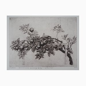 The Apple Tree Engraving by Mordecaï Moreh