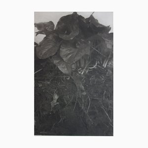 Philippe MARTIN - La terre du printemps, photogravure originale signée