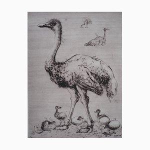Incisioni Ostriches di Mordecaï Moreh, 1937