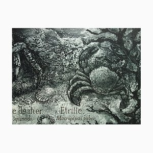 Monde Sous-Marin Engraving by Francis Mockel