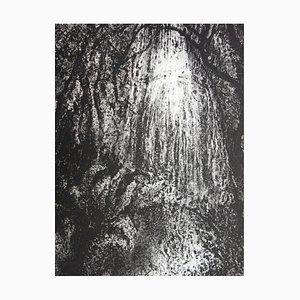 Gravure Jungle Intérieure par Francis Mockel