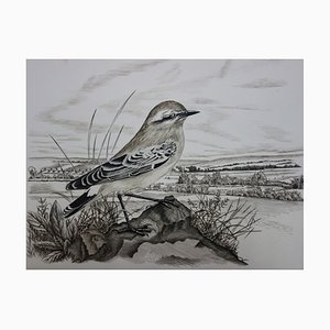 Moineau Solitaire Engraving by Tavy Notton