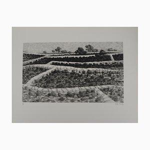 Maurice CHOT-PLASSOT: Jardin en spalier - Gravure originale signée