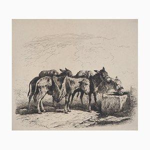 Felix BRISSOT DE WARWILLE - Spanische Esel, signierte originale Radierung