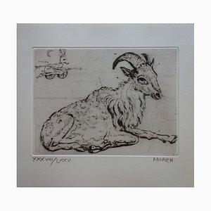 Un Bouc Se Reposant Engraving by Mordecaï Moreh