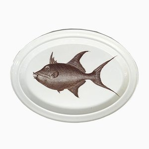Queen Triggerfish Plate by Susan Williams-Ellis for Portmeirion, 1970s