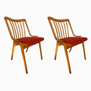 Mid-Century Dining Chairs from Drevopodnik Holesov, Set of 2
