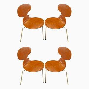 Ant Stühle von Arne Jacobsen für Fritz Hansen, 1950er, 4er Set