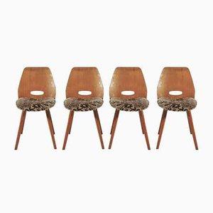 Esszimmerstühle von Tatra, 1960er, 4er Set