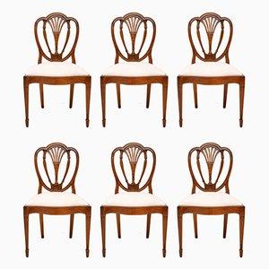 Antike Sheraton Esszimmerstühle aus Mahagoni, 6er Set