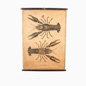 19th Century Lobster Education Chart