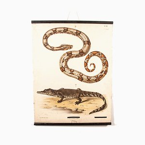 19th Century German Educational Snake and Crocodile Chart