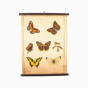 19th Century Educational Butterfly Chart