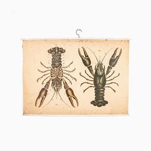 Antique Educational Lobsters Chart
