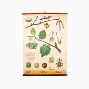 Antike Lehrtafel über Pflanzen & Insekten