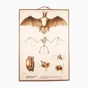 Antike Lehrtafel über Fledermäuse