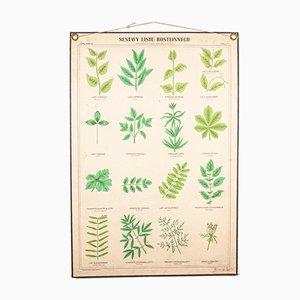 Antike Lehrtafel über Pflanzen