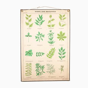 Antique Rigid Chart Plants Educational Poster