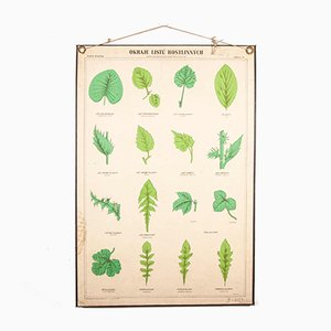 Antique Leaf Varieties Rigid Chart Plants Educational Poster