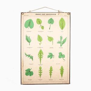 Stampa educativa raffigurante piante antiche con foglie