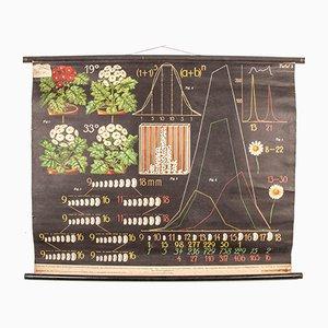 Antike Lehrtafel über Saatgutproduktion