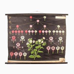 Antique Plant Development Educational Poster