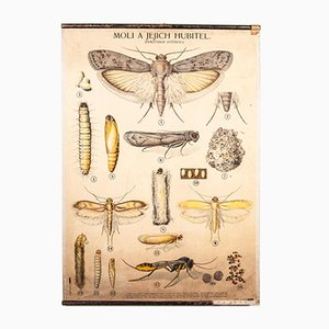 Antique Educational Moths And Their Killers Chart Poster