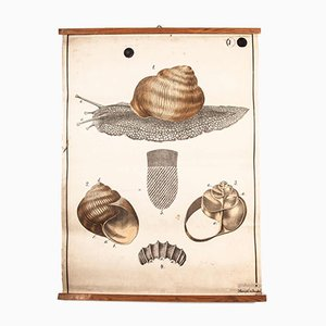Antique Czechoslovakian Educational Chart Garden Snail Poster
