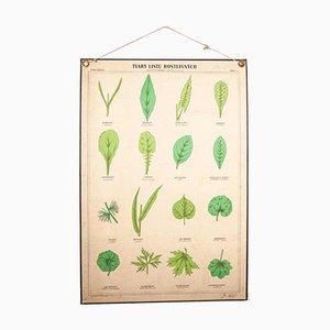 Poster botanico educativo antico