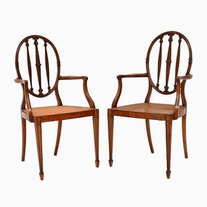 Antike Armlehnstühle aus Satinholz & Schilfrohrgeflecht, 2er Set