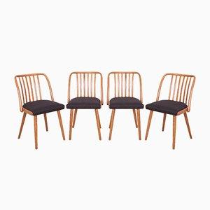 Chaises de Salle à Manger par Antonín Šuman pour TON, années 60, Set de 4