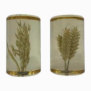 Lucite & Pressed Wheat Decorative Items, 1970s, Set of 2