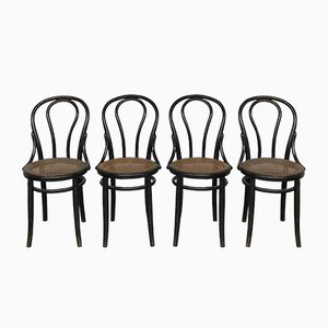 Antique Bentwood Dining Chairs from Thonet, Set of 4