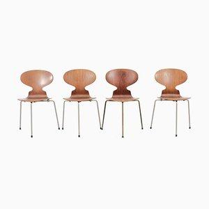 Chaises Ant Mid-Century par Arne Jacobsen pour Fritz Hansen, Set de 4
