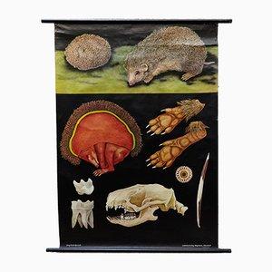 Grand Tableau d'Enseignement Animal, Allemagne, années 60