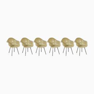 Sillas auxiliares modelo DAX Mid-Century de Charles & Ray Eames para Herman Miller. Juego de 6