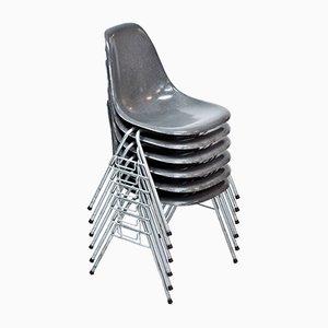 Sedie da pranzo DSS in fibra di vetro grigia di Charles & Ray Eames per Hille, anni '60, set di 6