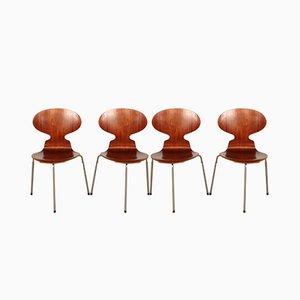 Ant Esszimmerstühle aus Teak von Arne Jacobsen für Fritz Hansen, 1950er, 4er Set