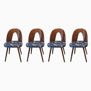 Walnuss Esszimmerstühle von Antonín Šuman für Mier, 1960er, Set of 4