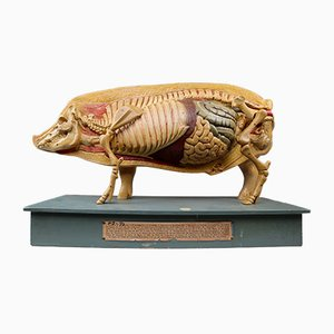 German Anatomical Model of a Pig, 1930s
