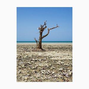 Still Alive, Zanzibar Photograph by Pierre Lesage