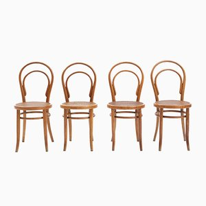 Antique Bentwood Dining Chair by D.G. Fischel for D.G. Fischel