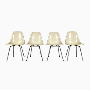 Fiberglas DSW Stühle von Charles & Ray Eames für Herman Miller, 1980er, 4er Set