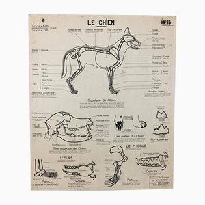French Vintage Anatomical Dog Chart, 1960s