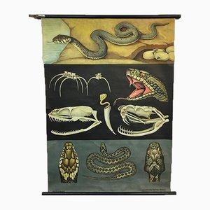 Vintage Jung Koch Quentell Viper Chart