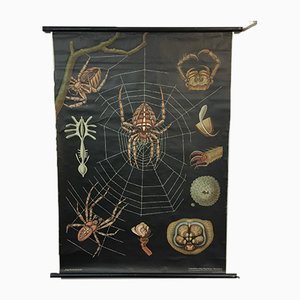 Vintage Jung Koch Quentell Spider Chart